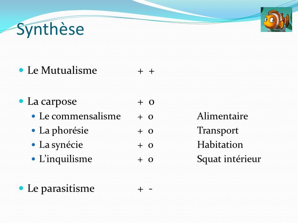 Le Mutualisme + + La carpose + 0 Le commensalisme+ 0 Alimentaire La phorésie+ 0Transport La synécie+ 0Habitation Linquilisme+ 0Squat intérieur Le para