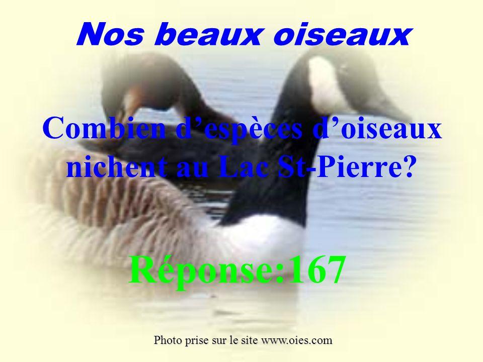 la principale activité est sans aucun doute la voile. Le lac St-Pierre est un plan deau idéal pour les amateurs de voile. Ses eaux peu profondes et la
