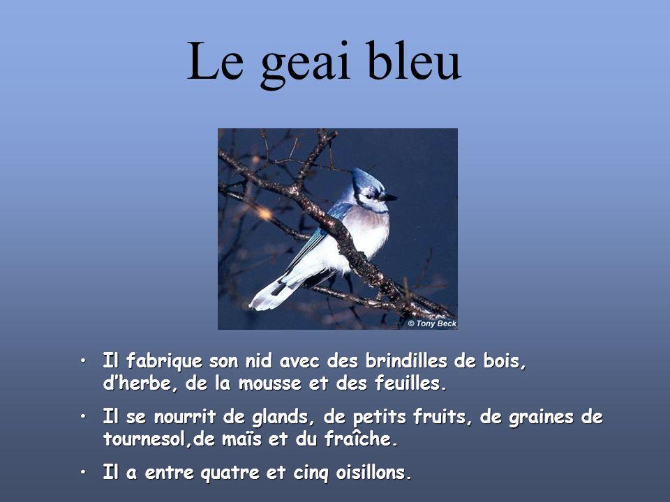 Le grand héron bleu On retrouve au Lac St-Pierre, la plus grande héronnière en Amérique du nord. Il y a 1300 nids. Le grand héron peut pondre jusqu à