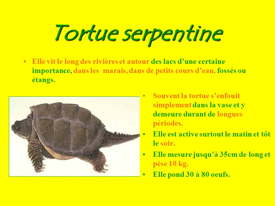 Trois tortues têtues, trottant trottinette... Combien despèces de tortues peut-on observer dans la réserve? 3