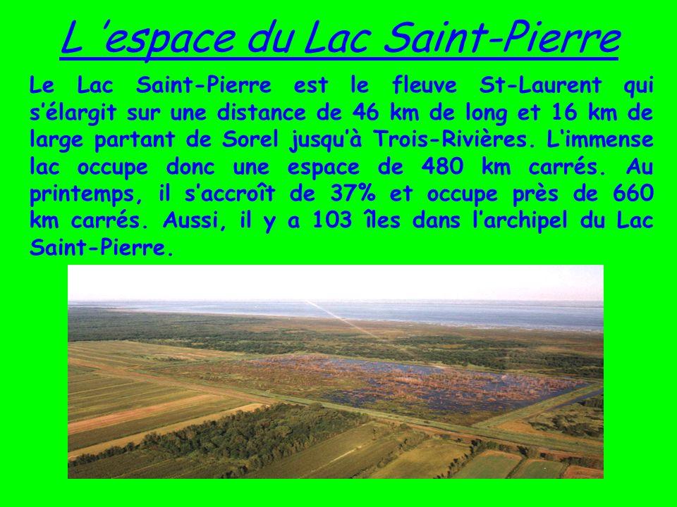 L espace du Lac Saint-Pierre Le Lac Saint-Pierre est le fleuve St-Laurent qui sélargit sur une distance de 46 km de long et 16 km de large partant de Sorel jusquà Trois-Rivières.