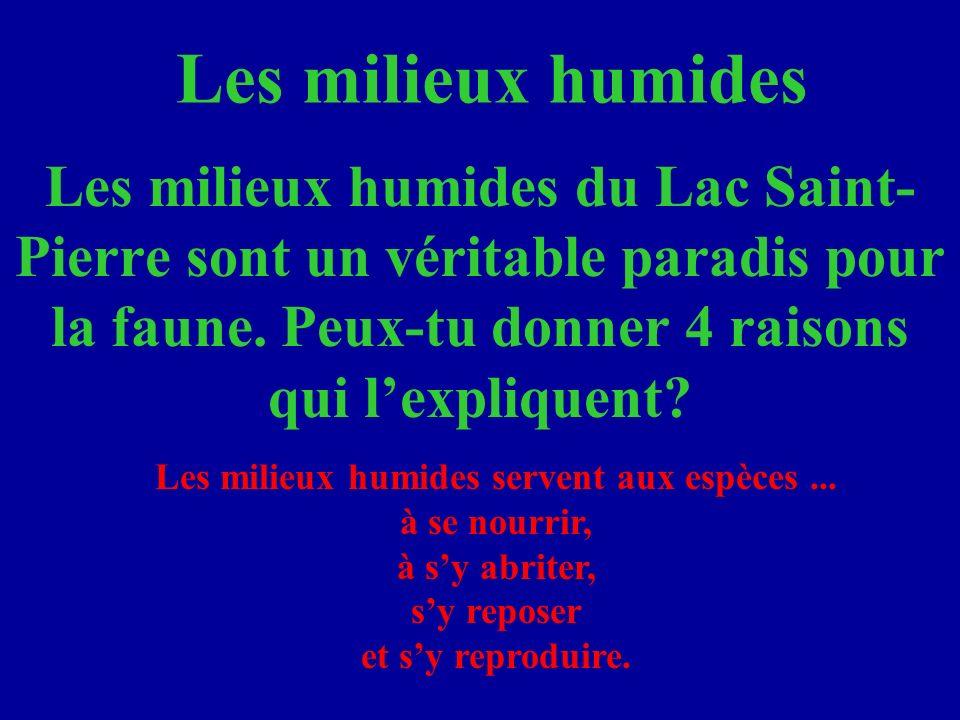 Les milieux humides Les milieux humides du Lac Saint- Pierre sont un véritable paradis pour la faune.