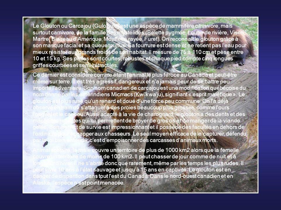 Le rat-taupe nu ou rat-taupe glabre (hétérocéphale), est un petit rongeur présent en Afrique de l'est (Somalie, Kenya, Éthiopie). Ce rongeur nu est l'