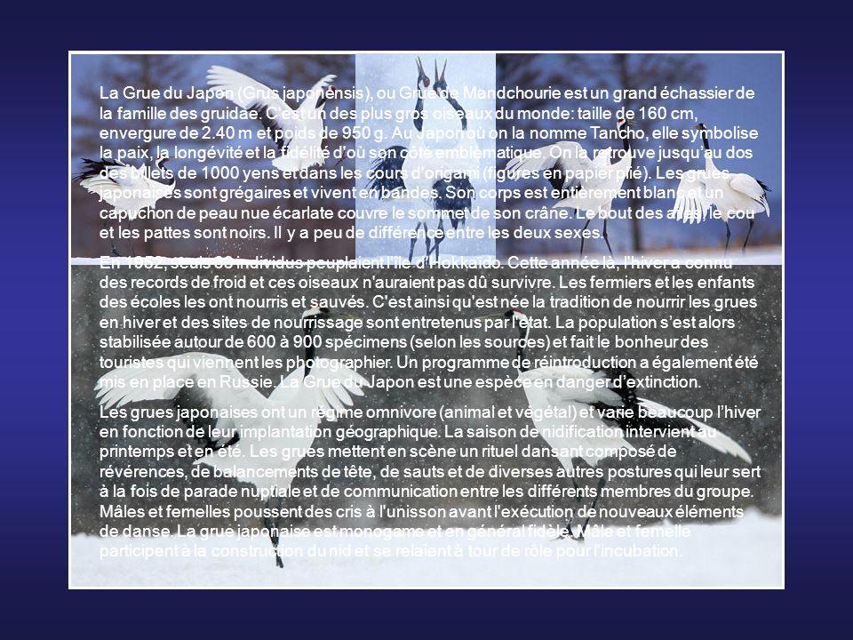 La Sterne arctique (Sterna paradisaea) est une espèce d'oiseau marin de la famille des laridés. Elle est célèbre pour sa migration, elle fait laller-r