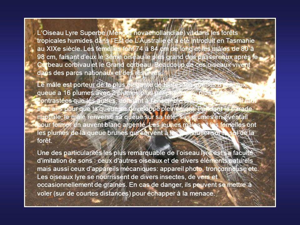 Le Bec-en-sabot du Nil (Balaeniceps rex) est une espèce ainsi nommé à cause de son bec qui est plus gros que sa tête. Cet oiseau aux allures préhistor