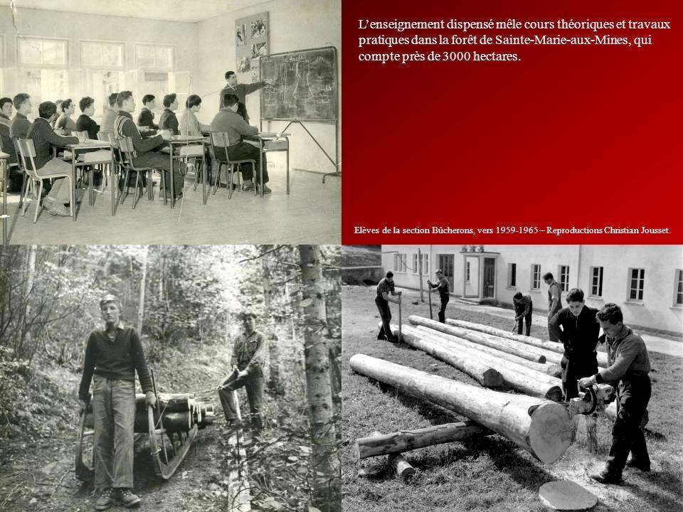 Lenseignement dispensé mêle cours théoriques et travaux pratiques dans la forêt de Sainte-Marie-aux-Mines, qui compte près de 3000 hectares. Elèves de