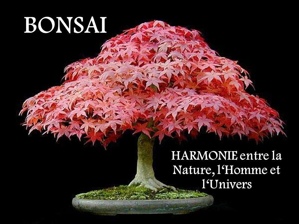 BONSAI HARMONIE entre la Nature, lHomme et lUnivers
