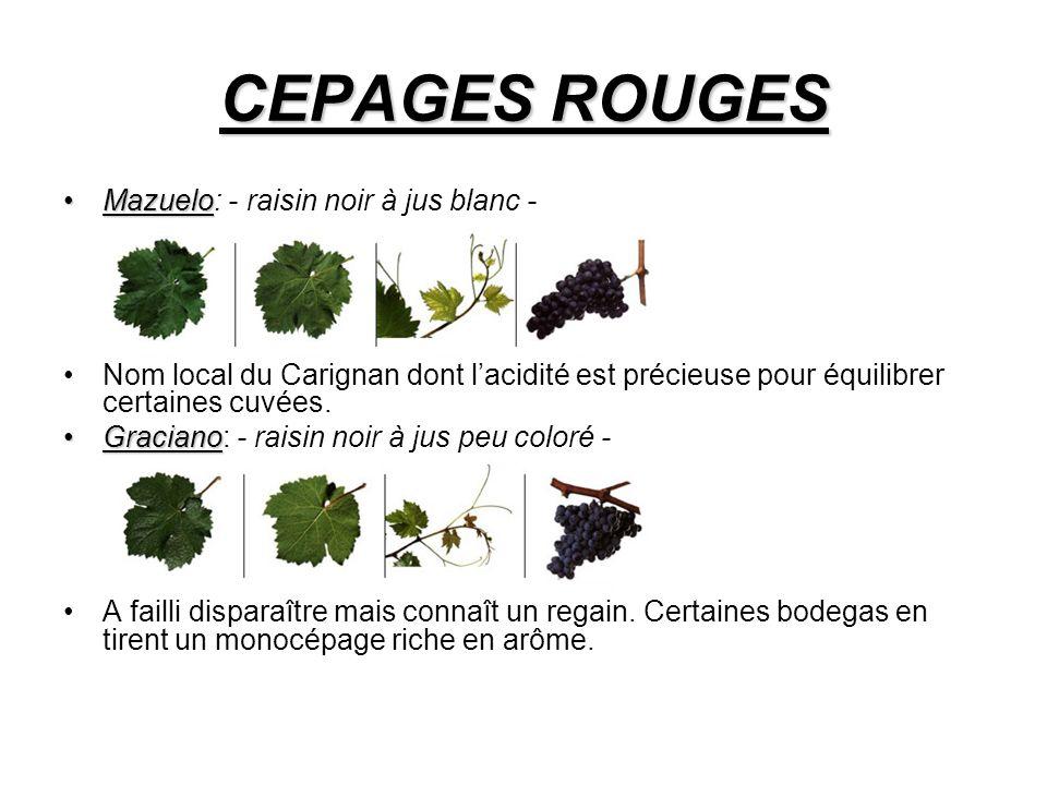 CEPAGES ROUGES MazueloMazuelo: - raisin noir à jus blanc - Nom local du Carignan dont lacidité est précieuse pour équilibrer certaines cuvées.