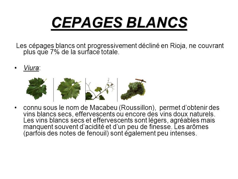 CEPAGES BLANCS Les cépages blancs ont progressivement décliné en Rioja, ne couvrant plus que 7% de la surface totale.