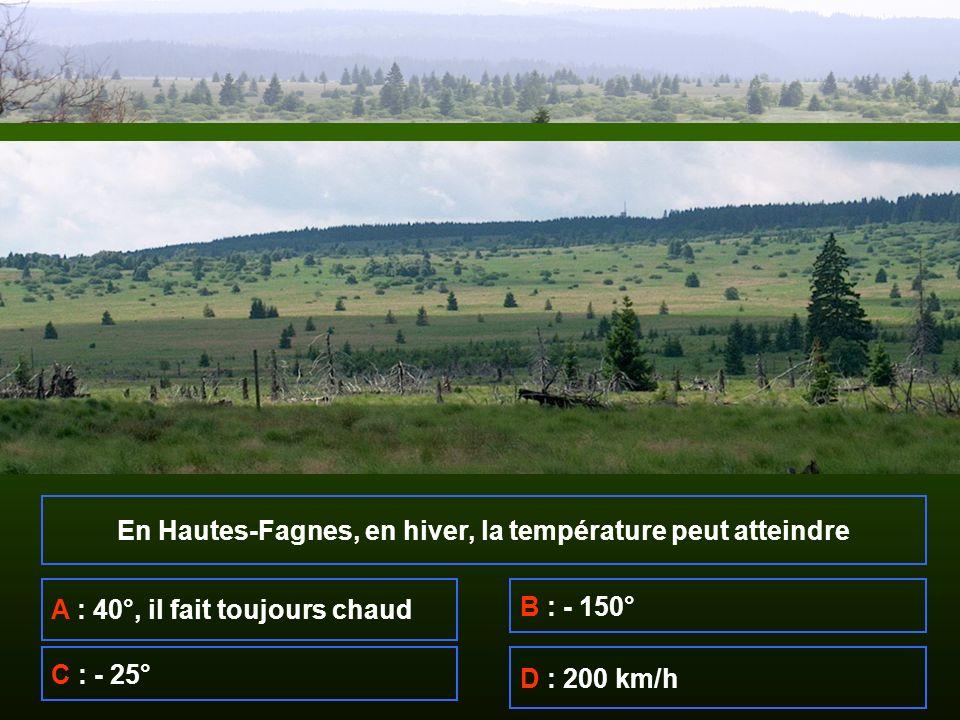 En Hautes-Fagnes, en hiver, la température peut atteindre A : 40°, il fait toujours chaud B : - 150° C : - 25° D : 200 km/h