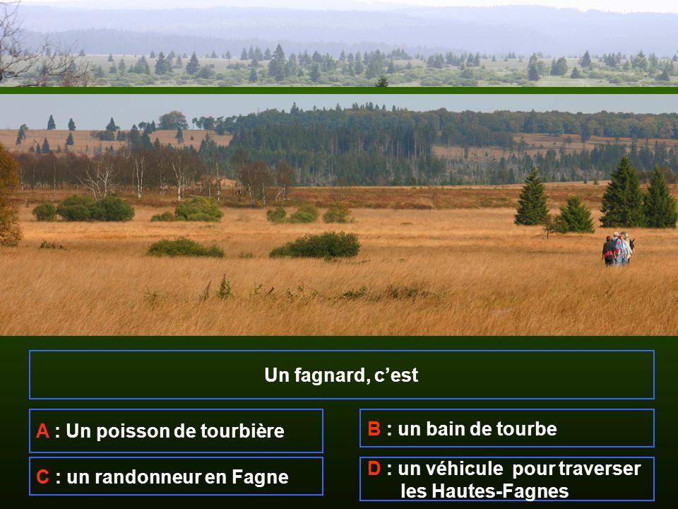 Un fagnard, cest A : Un poisson de tourbière B : un bain de tourbe C : un randonneur en Fagne D : un véhicule pour traverser les Hautes-Fagnes
