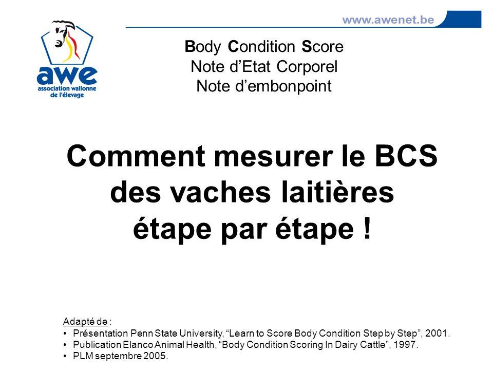 Comment mesurer le BCS des vaches laitières étape par étape ! Body Condition Score Note dEtat Corporel Note dembonpoint Adapté de : Présentation Penn