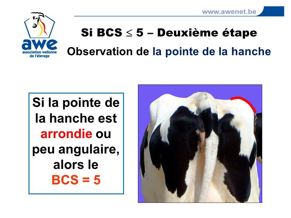 Si BCS 5 – Deuxième étape Observation de la pointe de la hanche Si la pointe de la hanche est arrondie ou peu angulaire, alors le BCS = 5