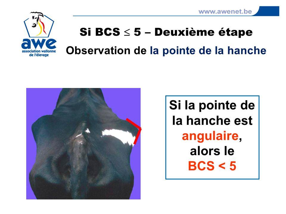 Si la pointe de la hanche est angulaire, alors le BCS < 5 Si BCS 5 – Deuxième étape Observation de la pointe de la hanche