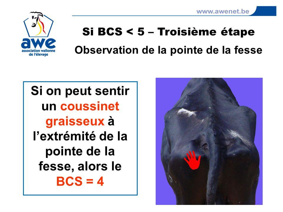 Si on peut sentir un coussinet graisseux à lextrémité de la pointe de la fesse, alors le BCS = 4 Si BCS < 5 – Troisième étape Observation de la pointe