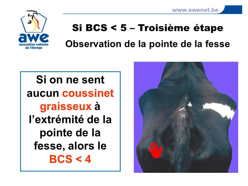 Si on ne sent aucun coussinet graisseux à lextrémité de la pointe de la fesse, alors le BCS < 4 Si BCS < 5 – Troisième étape Observation de la pointe