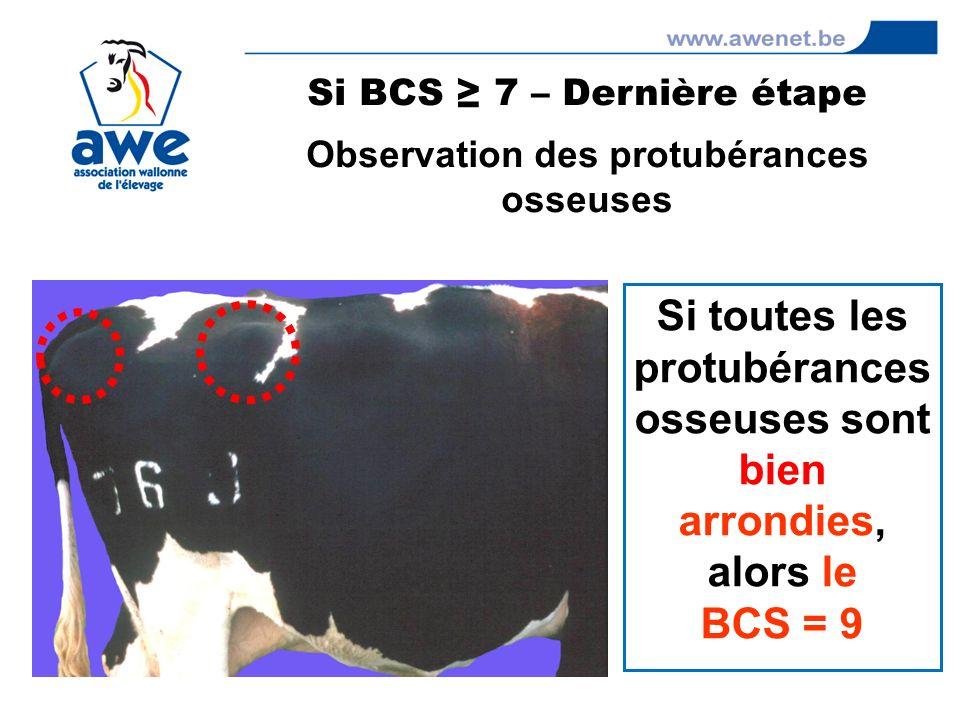 Si toutes les protubérances osseuses sont bien arrondies, alors le BCS = 9 Si BCS 7 – Dernière étape Observation des protubérances osseuses