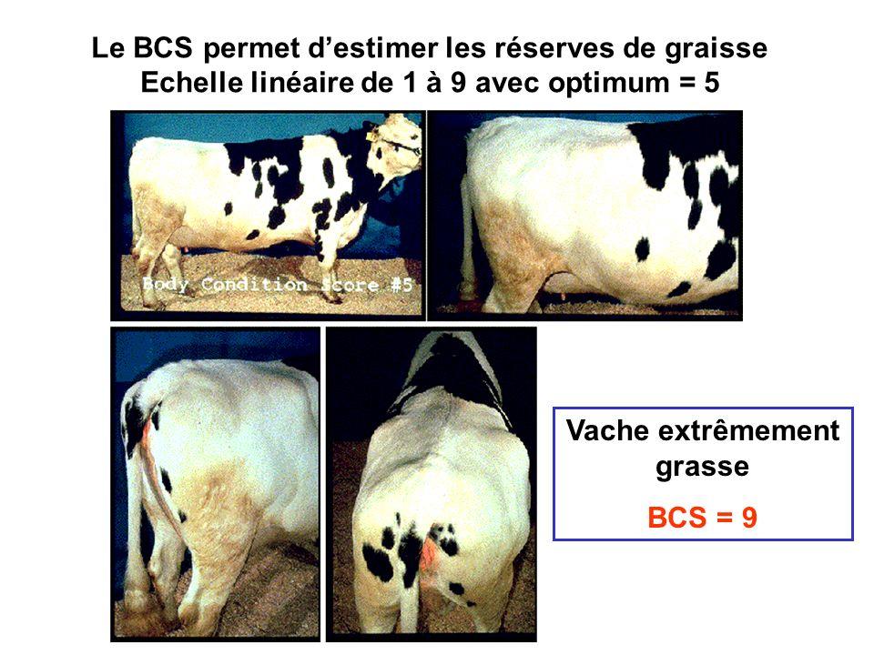Vache extrêmement grasse BCS = 9 Le BCS permet destimer les réserves de graisse Echelle linéaire de 1 à 9 avec optimum = 5