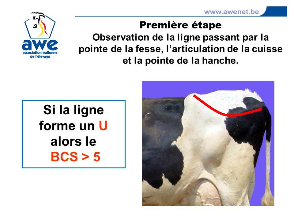 Si la ligne forme un U alors le BCS > 5 Première étape Observation de la ligne passant par la pointe de la fesse, larticulation de la cuisse et la poi