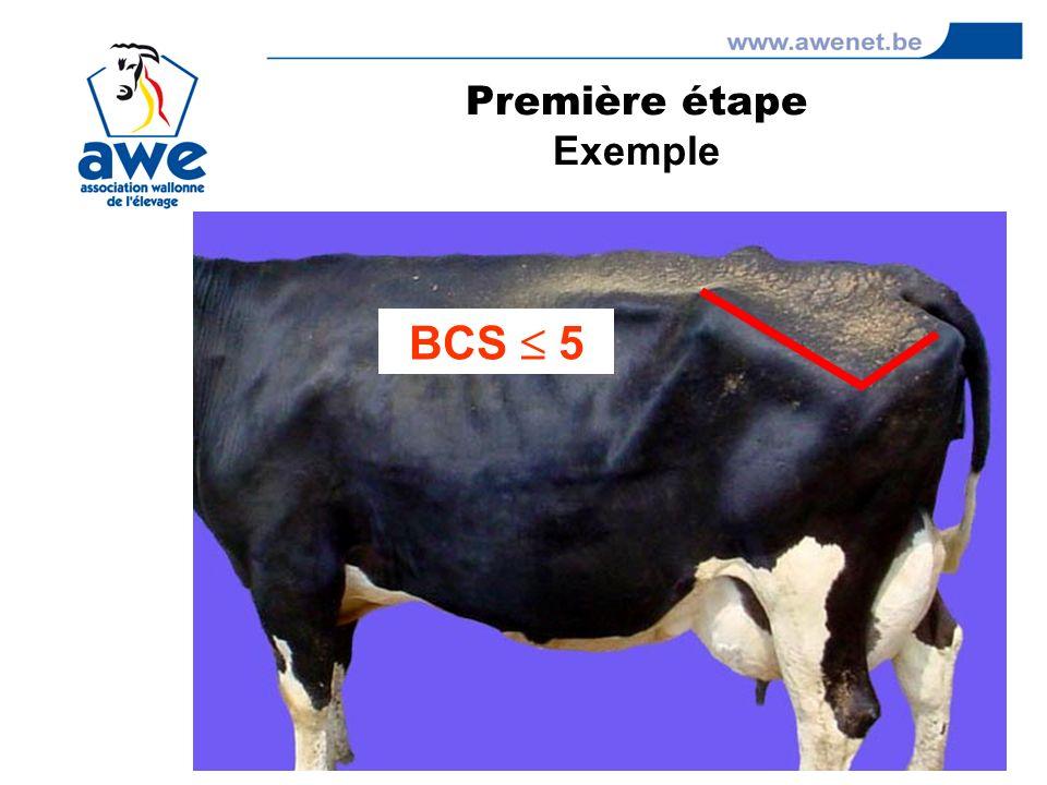 BCS 5 Première étape Exemple