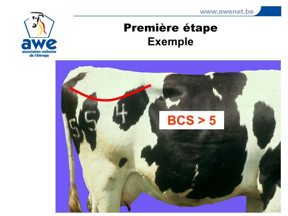 BCS > 5 Première étape Exemple