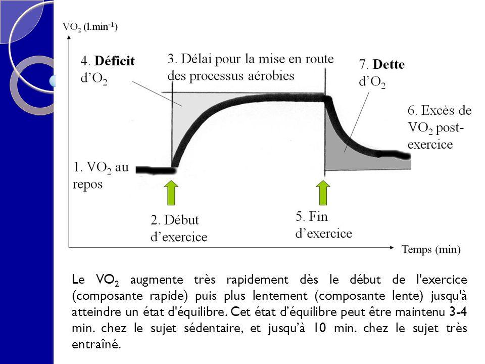 Le VO 2 augmente très rapidement dès le début de l'exercice (composante rapide) puis plus lentement (composante lente) jusqu'à atteindre un état d'équ