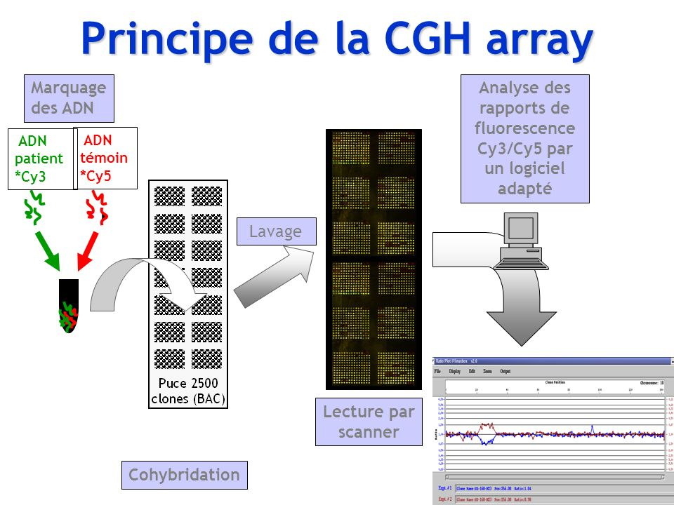 ADN patient *Cy3 ADN témoin *Cy5 Cohybridation Lavage Lecture par scanner Analyse des rapports de fluorescence Cy3/Cy5 par un logiciel adapté Marquage