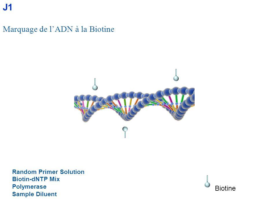 Random Primer Solution Biotin-dNTP Mix Polymerase Sample Diluent Marquage de lADN à la Biotine Biotine J1