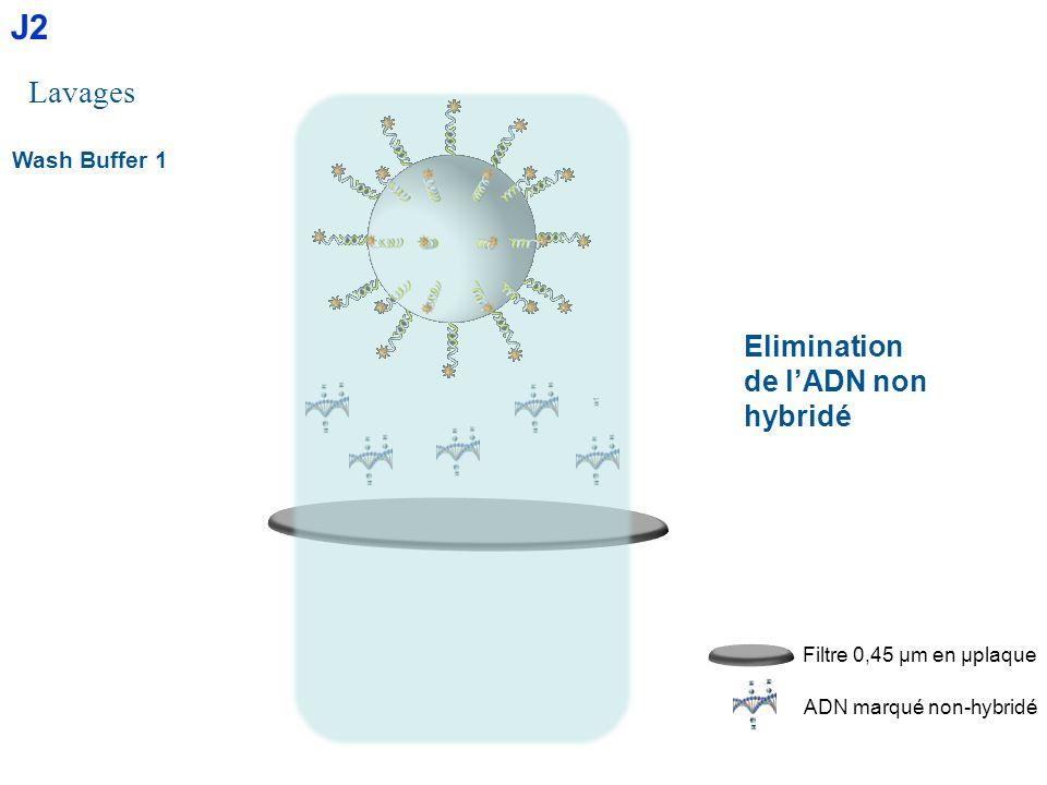 Wash Buffer 1 Lavages Elimination de lADN non hybridé ADN marqué non-hybridé Filtre 0,45 µm en µplaque J2
