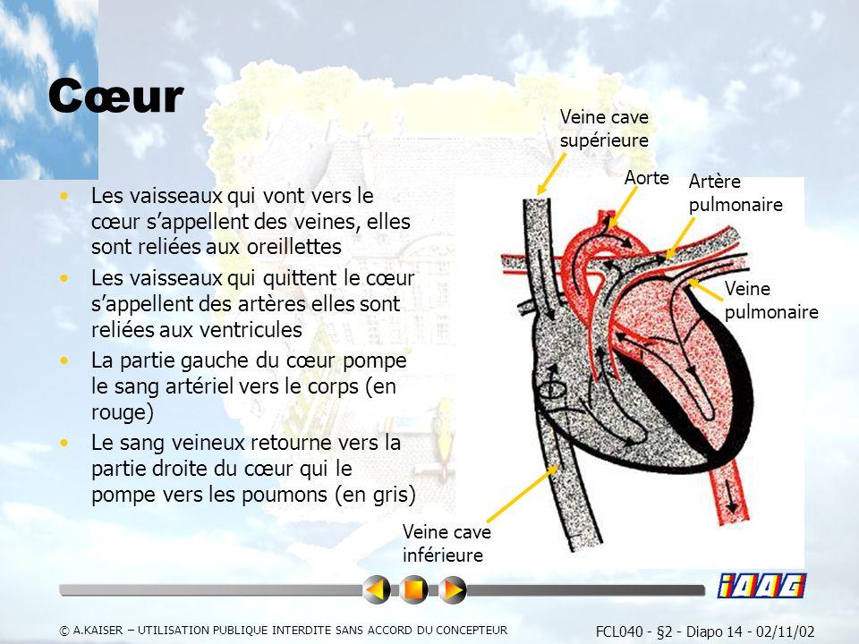 FCL040 - §2 - Diapo 14 - 02/11/02 © A.KAISER – UTILISATION PUBLIQUE INTERDITE SANS ACCORD DU CONCEPTEUR Cœur Les vaisseaux qui vont vers le cœur sappellent des veines, elles sont reliées aux oreillettes Les vaisseaux qui quittent le cœur sappellent des artères elles sont reliées aux ventricules La partie gauche du cœur pompe le sang artériel vers le corps (en rouge) Le sang veineux retourne vers la partie droite du cœur qui le pompe vers les poumons (en gris) Aorte Artère pulmonaire Veine cave supérieure Veine cave inférieure Veine pulmonaire