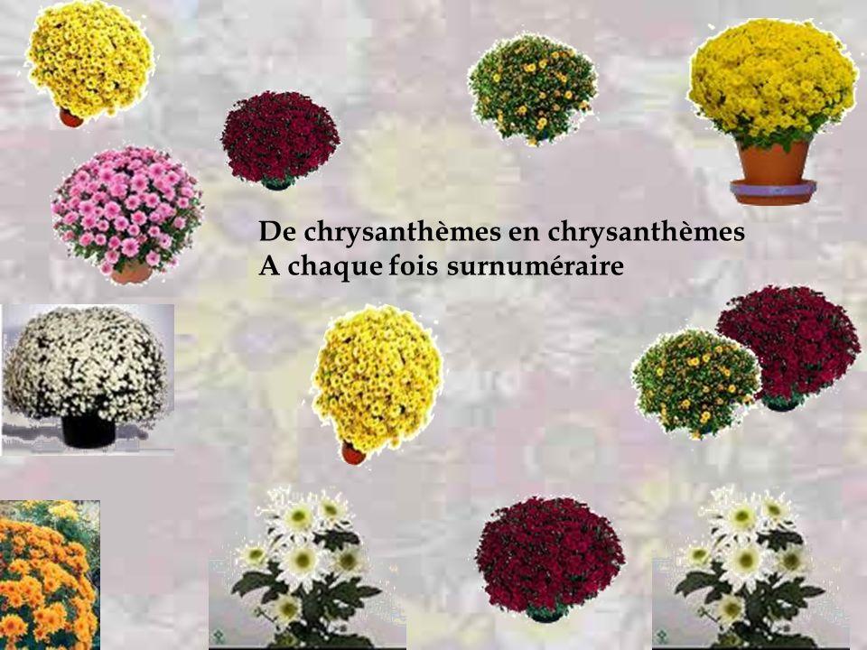 De chrysanthèmes en chrysanthèmes A chaque fois plus solitaire
