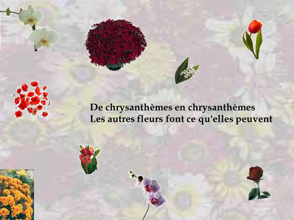 De chrysanthèmes en chrysanthèmes La mort potence nos dulcinées