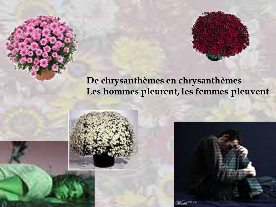 De chrysanthèmes en chrysanthèmes Les autres fleurs font ce qu'elles peuvent