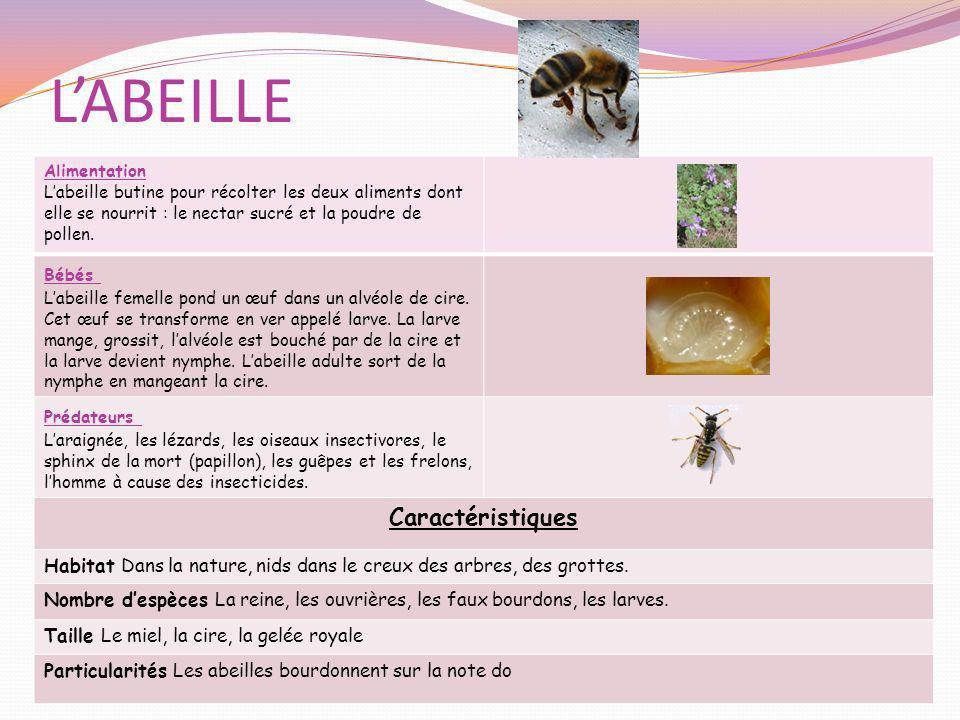 LABEILLE Alimentation Labeille butine pour récolter les deux aliments dont elle se nourrit : le nectar sucré et la poudre de pollen. Bébés Labeille fe