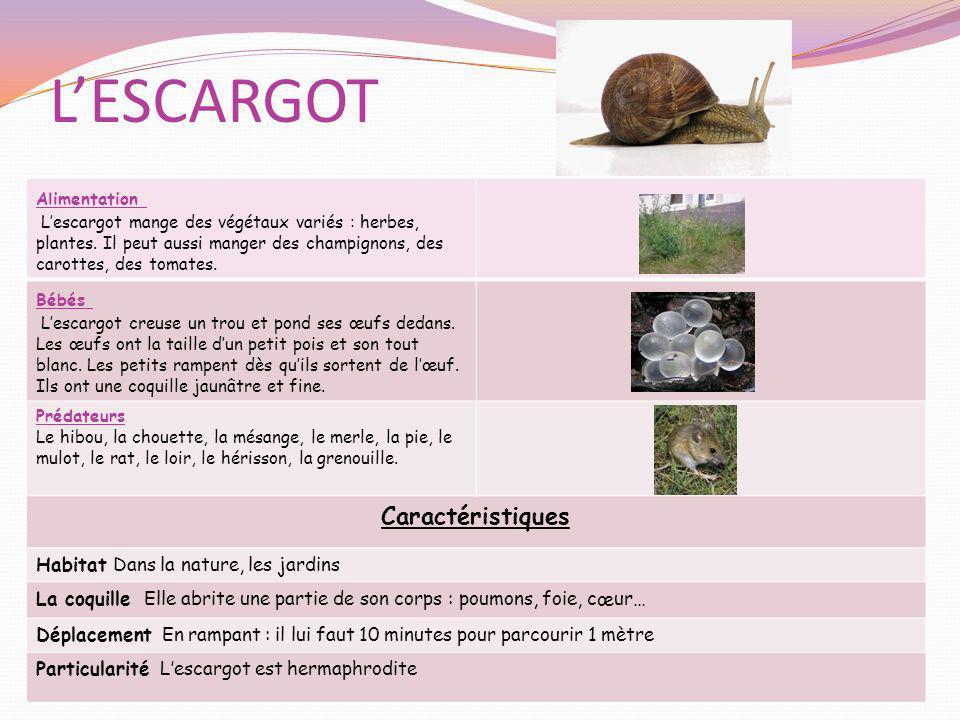 LESCARGOT Alimentation Lescargot mange des végétaux variés : herbes, plantes. Il peut aussi manger des champignons, des carottes, des tomates. Bébés L