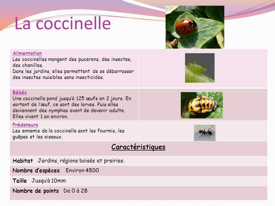 La coccinelle Alimentation Les coccinelles mangent des pucerons, des insectes, des chenilles. Dans les jardins, elles permettent de se débarrasser des