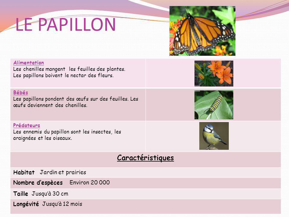 LE PAPILLON Alimentation Les chenilles mangent les feuilles des plantes. Les papillons boivent le nectar des fleurs. Bébés Les papillons pondent des œ