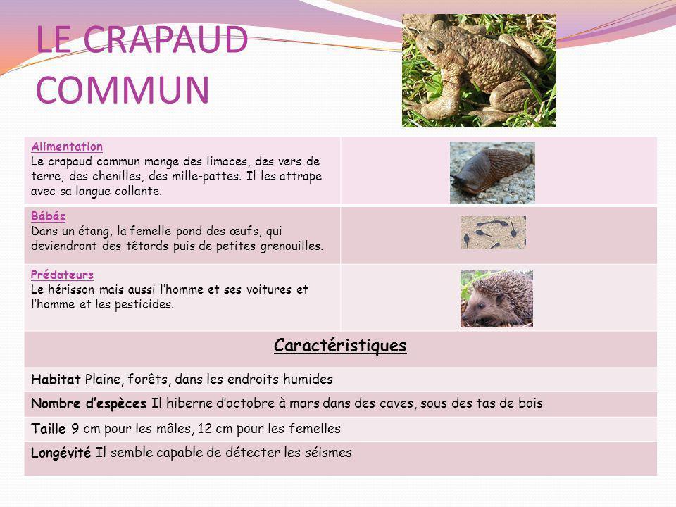 LE CRAPAUD COMMUN Alimentation Le crapaud commun mange des limaces, des vers de terre, des chenilles, des mille-pattes. Il les attrape avec sa langue