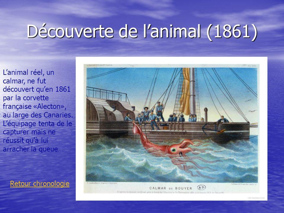 Découverte de lanimal (1861) Retour chronologie Lanimal réel, un calmar, ne fut découvert quen 1861 par la corvette française «Alecton», au large des