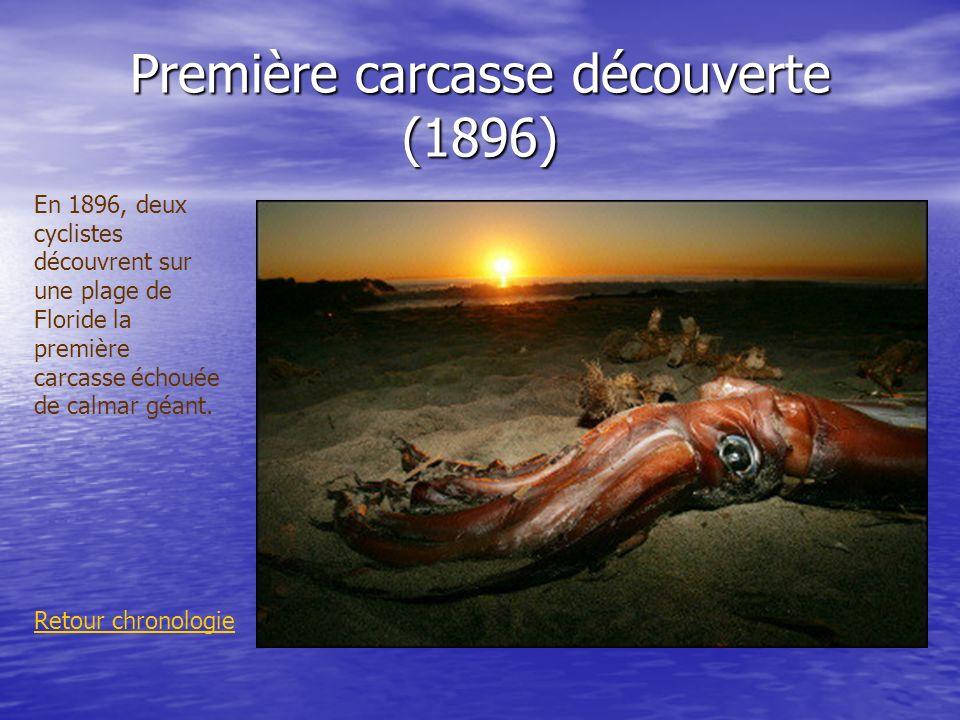 Première carcasse découverte (1896) Retour chronologie En 1896, deux cyclistes découvrent sur une plage de Floride la première carcasse échouée de cal