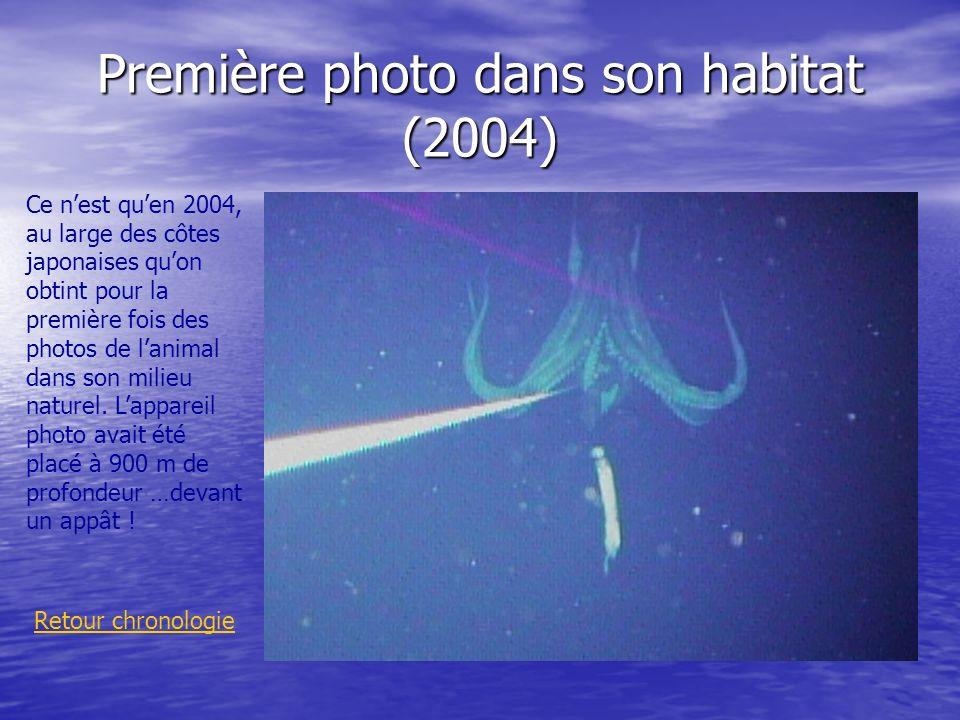 Première photo dans son habitat (2004) Retour chronologie Ce nest quen 2004, au large des côtes japonaises quon obtint pour la première fois des photo