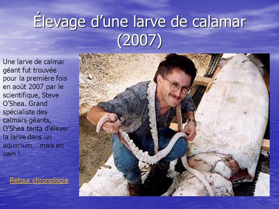 Élevage dune larve de calamar (2007) Retour chronologie Une larve de calmar géant fut trouvée pour la première fois en août 2007 par le scientifique,