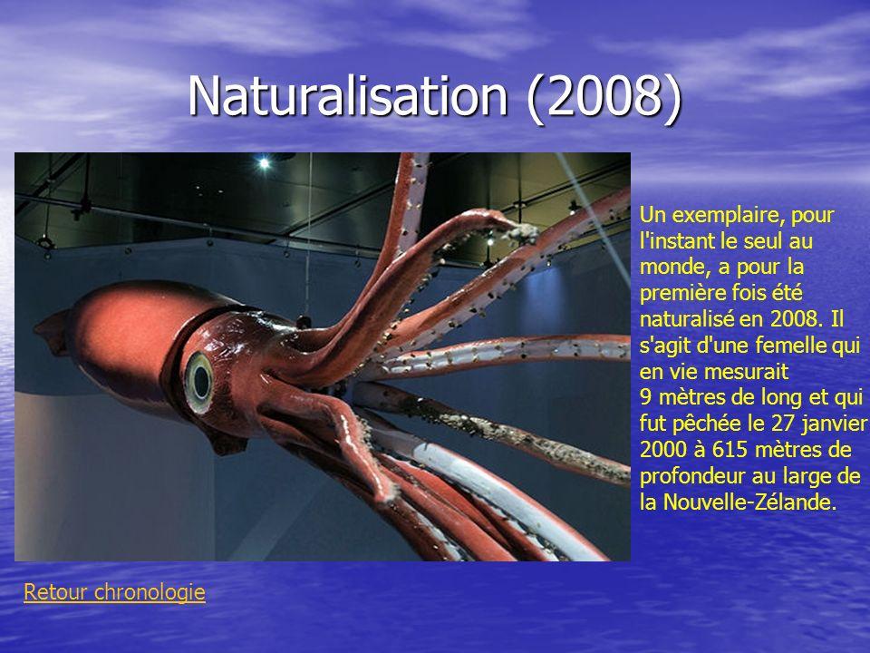 Naturalisation (2008) Retour chronologie Un exemplaire, pour l'instant le seul au monde, a pour la première fois été naturalisé en 2008. Il s'agit d'u