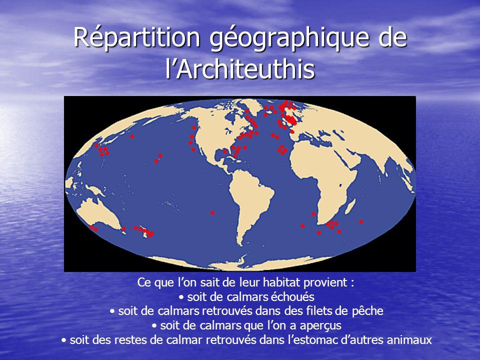 Répartition géographique de lArchiteuthis Ce que lon sait de leur habitat provient : soit de calmars échoués soit de calmars retrouvés dans des filets