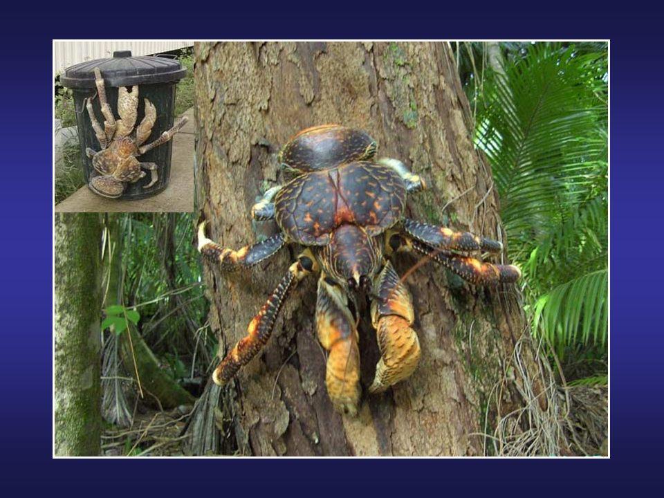 La Nasikabatrachus sahyadrensis (grenouille violette) est une nouvelle espèce de grenouille découverte en 2003 dans l'ouest de la région du Ghats en I