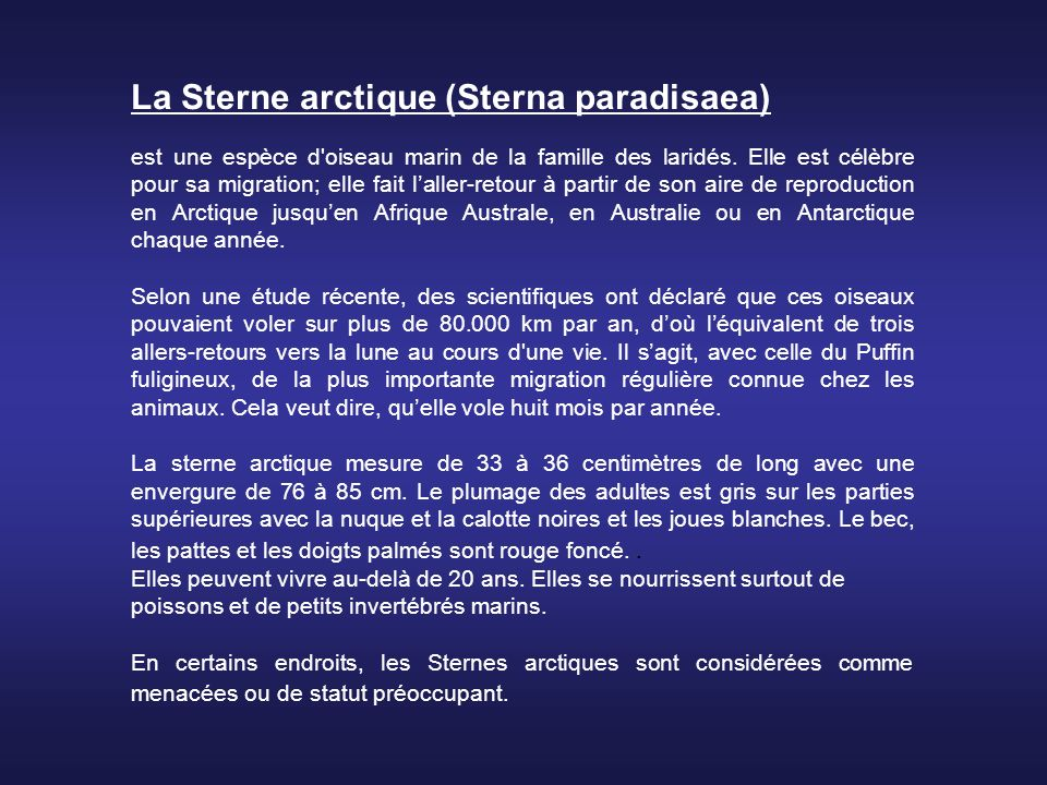 La Sterne arctique (Sterna paradisaea) est une espèce d oiseau marin de la famille des laridés.