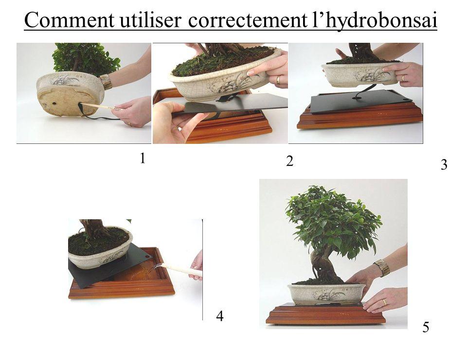Comment utiliser correctement lhydrobonsai 1 2 3 4 5