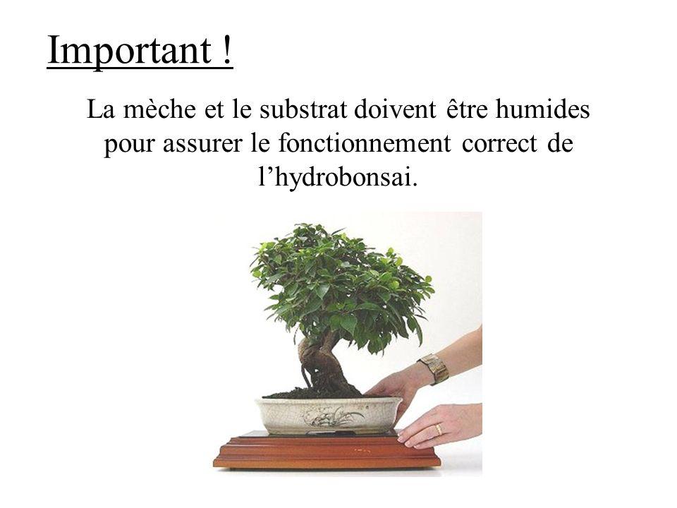 Important ! La mèche et le substrat doivent être humides pour assurer le fonctionnement correct de lhydrobonsai.
