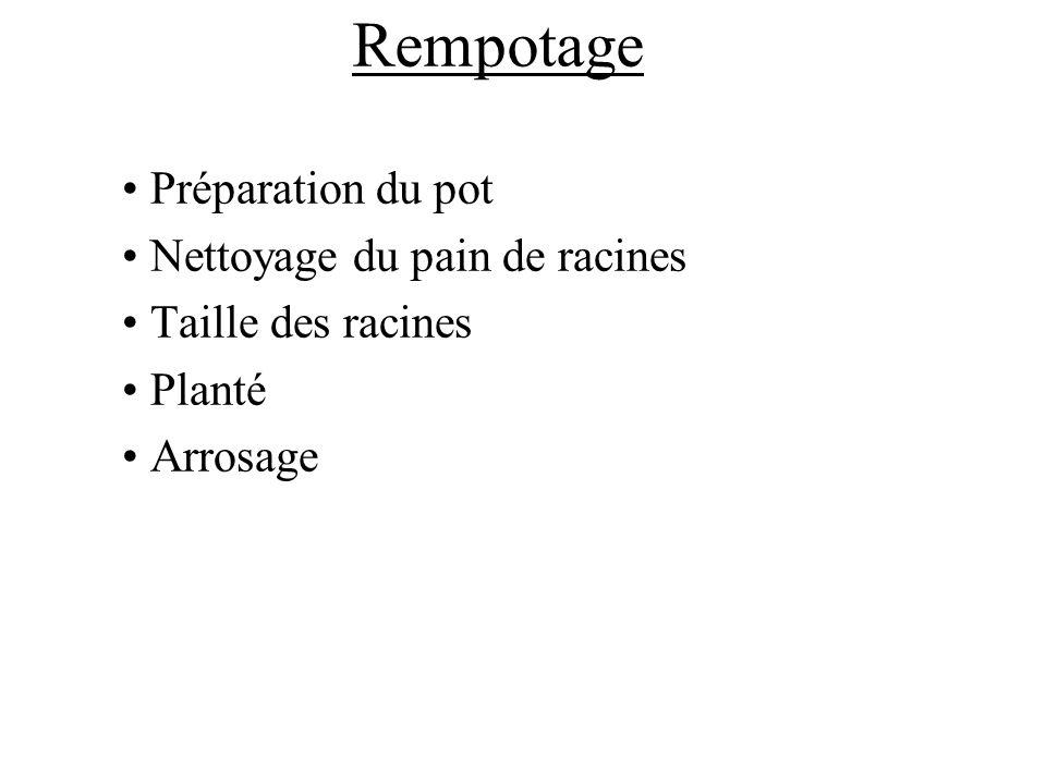 Rempotage Préparation du pot Nettoyage du pain de racines Taille des racines Planté Arrosage