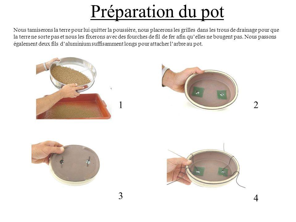 Préparation du pot 12 3 4 Nous tamiserons la terre pour lui quitter la poussière, nous placerons les grilles dans les trous de drainage pour que la te